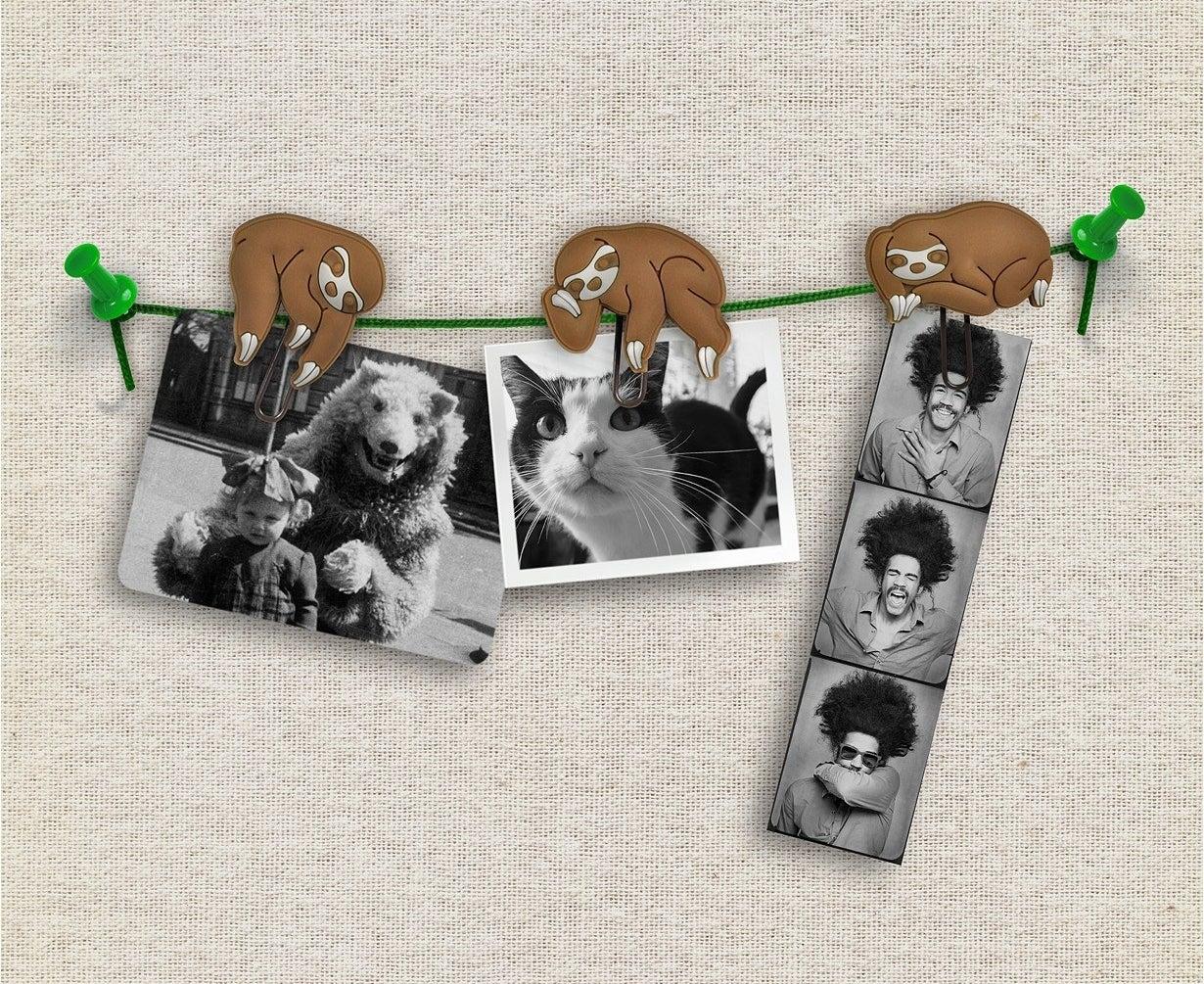 Three sloth hangers on the vine