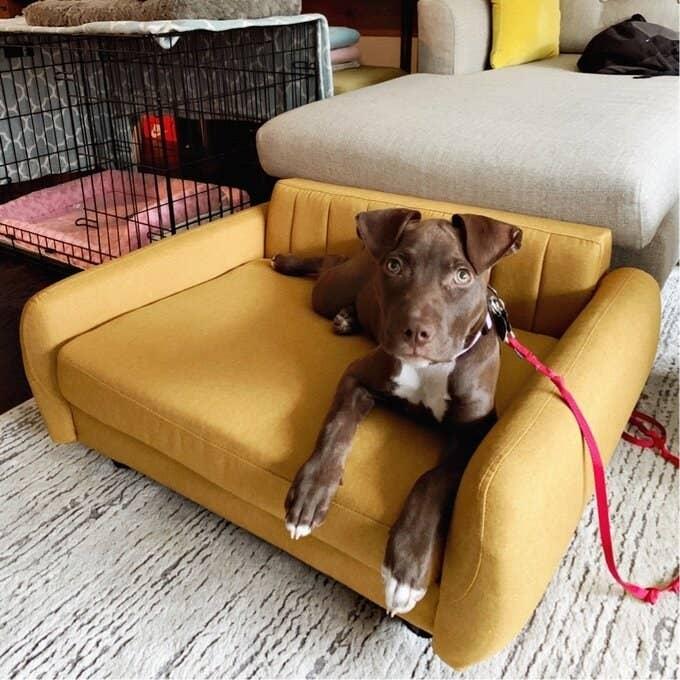 The mustard yellow pet sofa