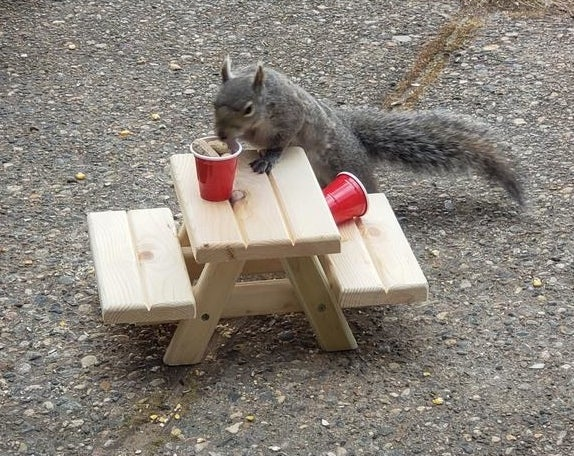 A squirrel on the mini picnic table