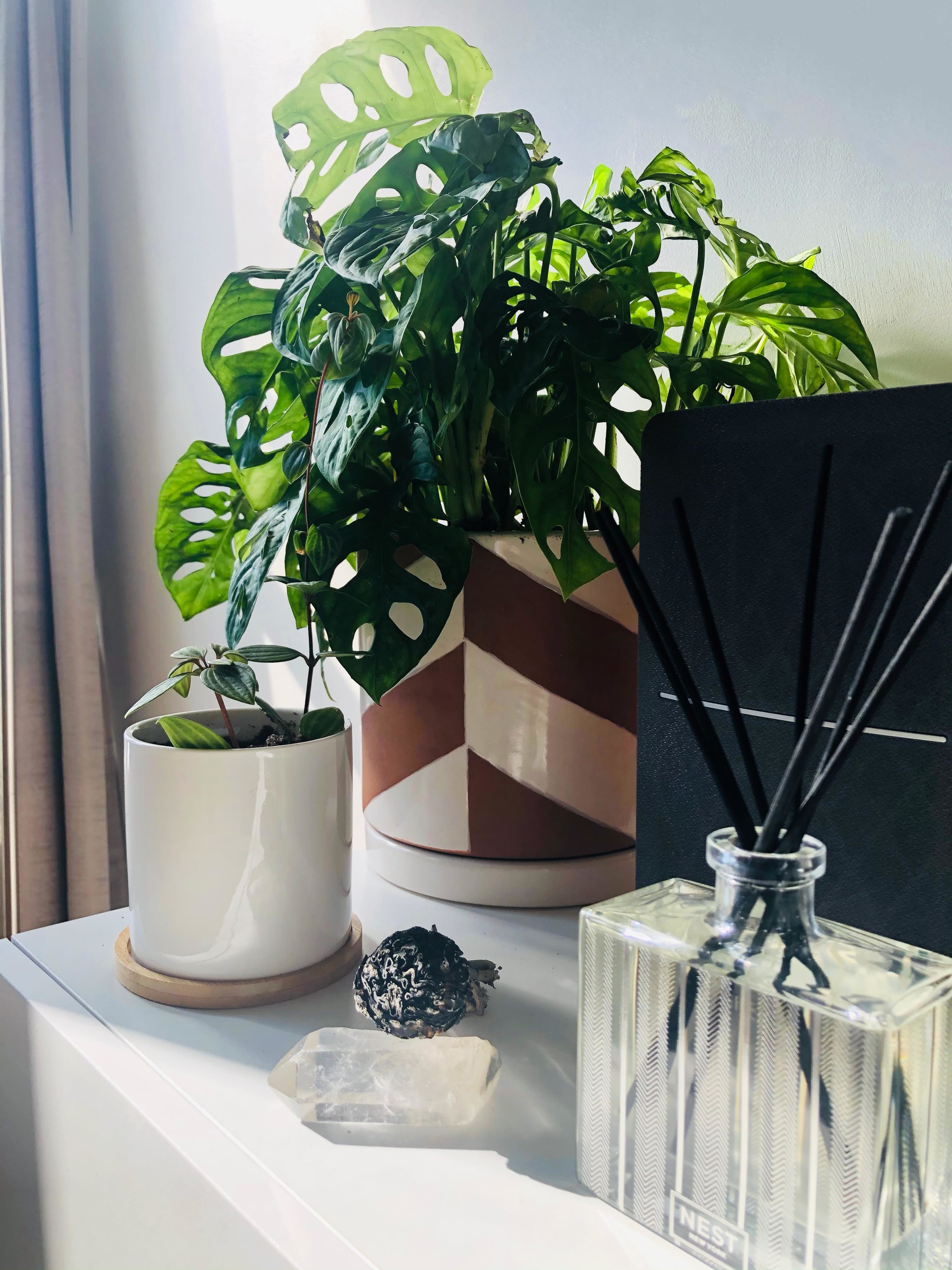 The reed diffuser next to plants, crystals, and sage