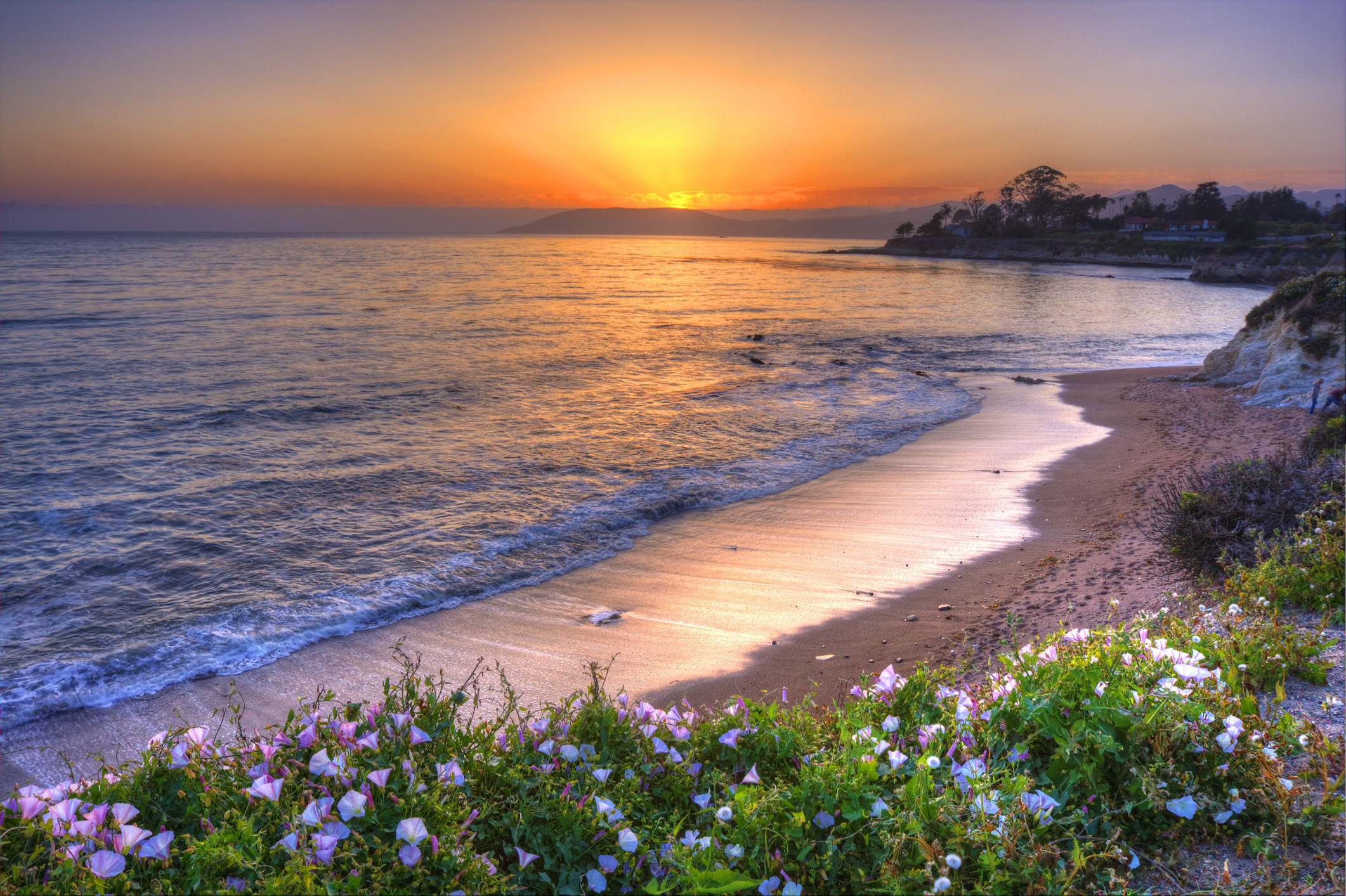 Shell Beach at sunset with wildflowers growing along the cliff