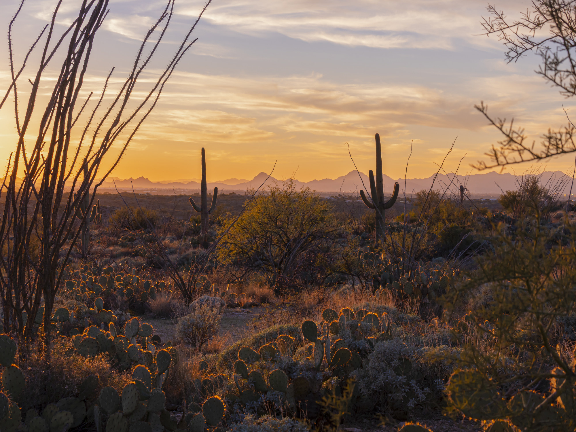 Sunset over the Arizona desert with two cacti in the background