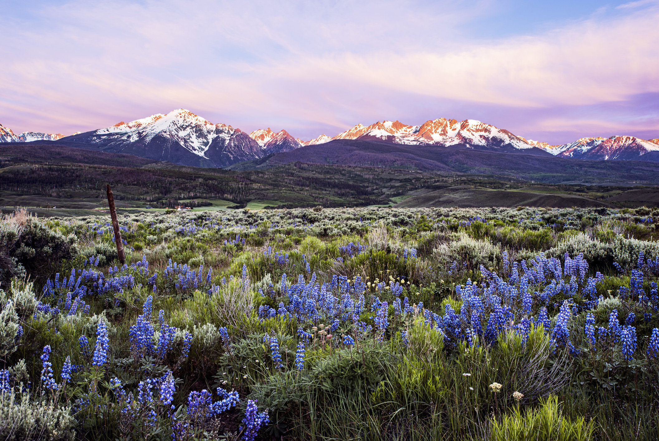 A snow-capped mountain range under a purple sunset with wild purple flowers in the foreground