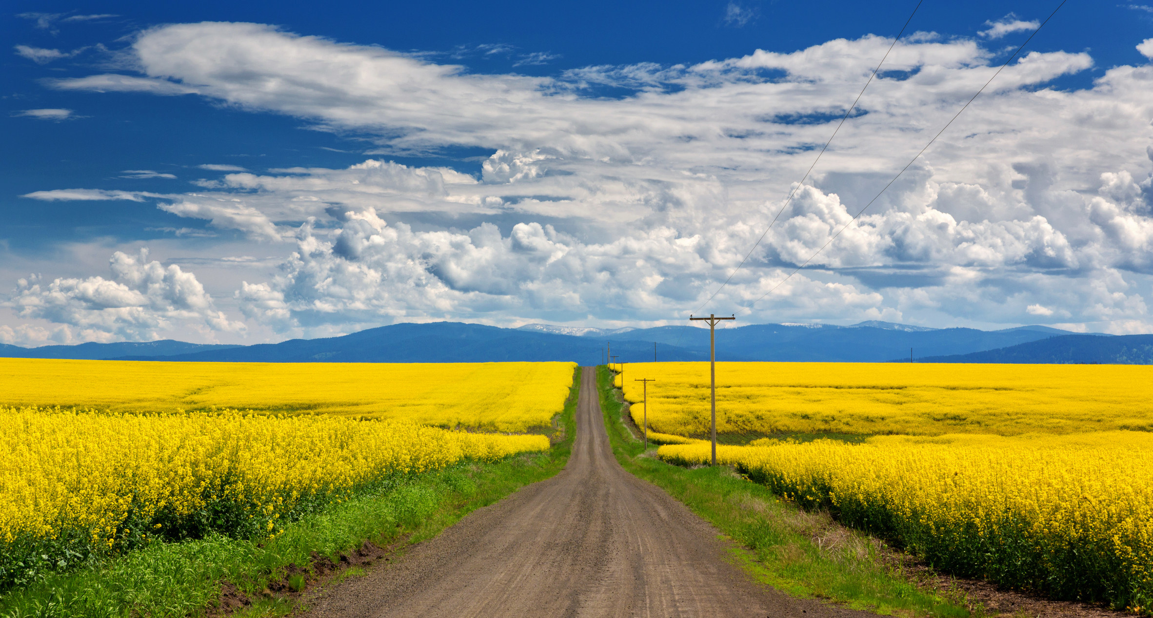 A dirt road extends towards mountains under a cloudy blue sky surrounded by a field of bright mustard flowers