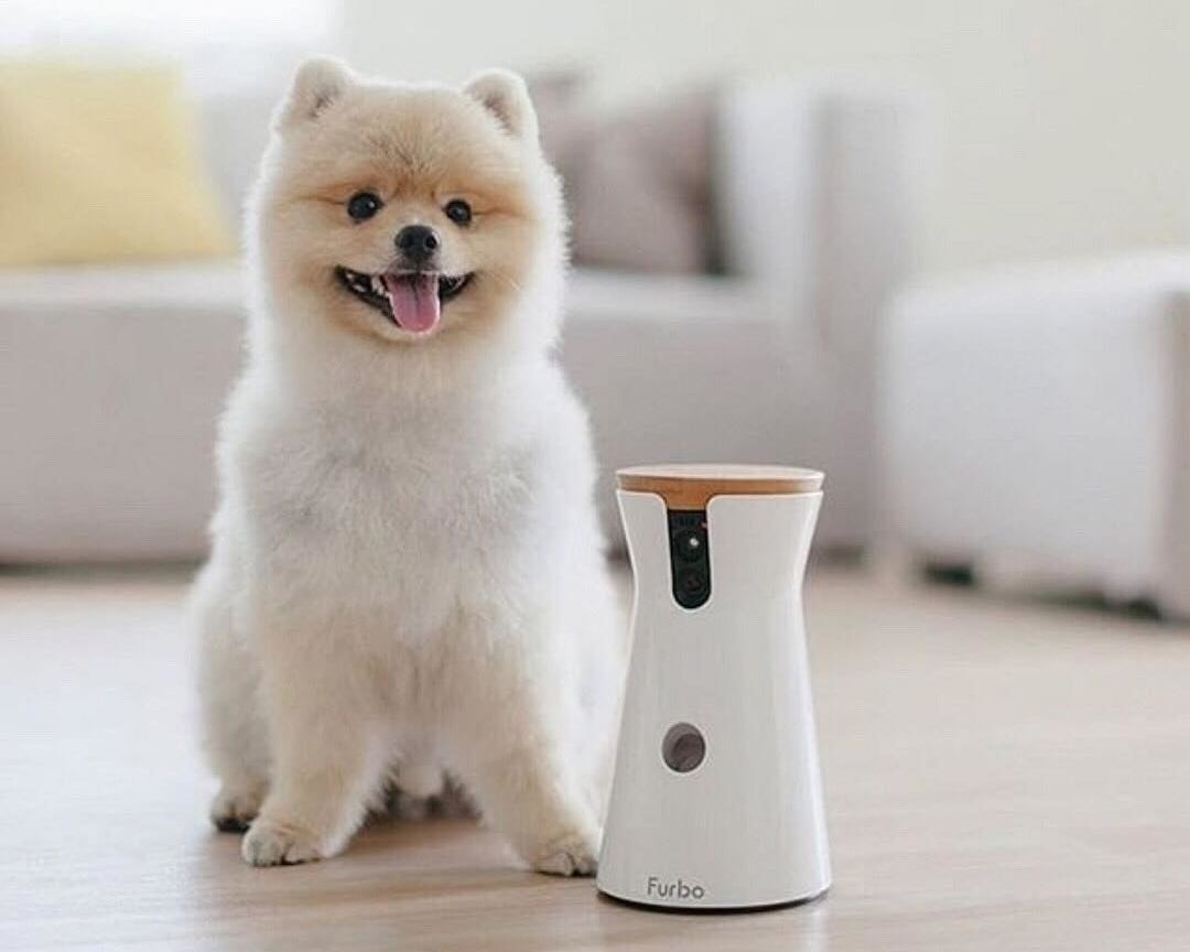 A small dog sitting next to a electronic pet camera and feeding device