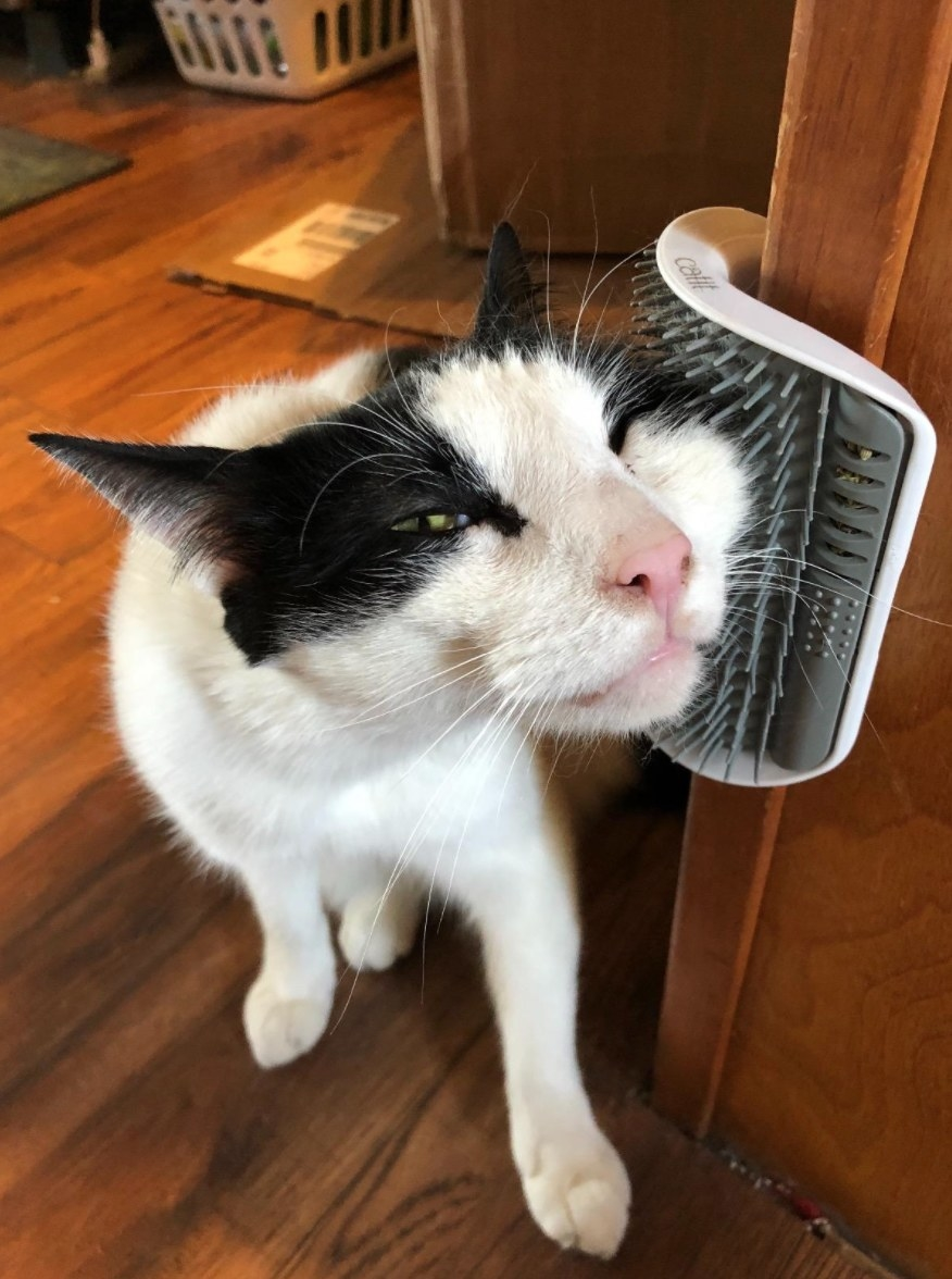 reviewer photo of the self-grooming cat toy
