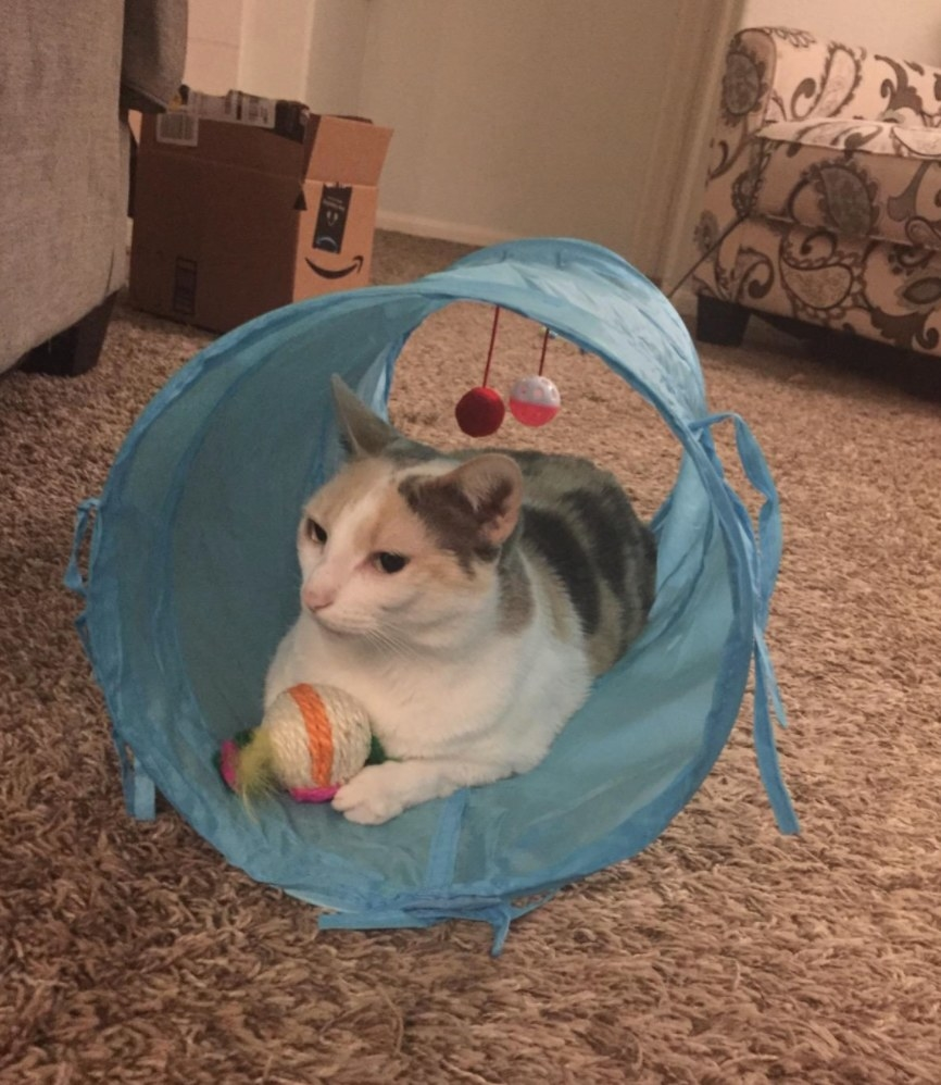 The interactive cat toys