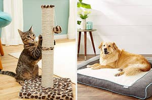 left, cat playing, right, dog on dog bed