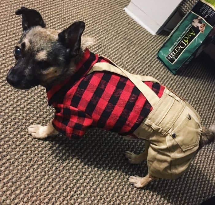 Reviewer's dog in the costume