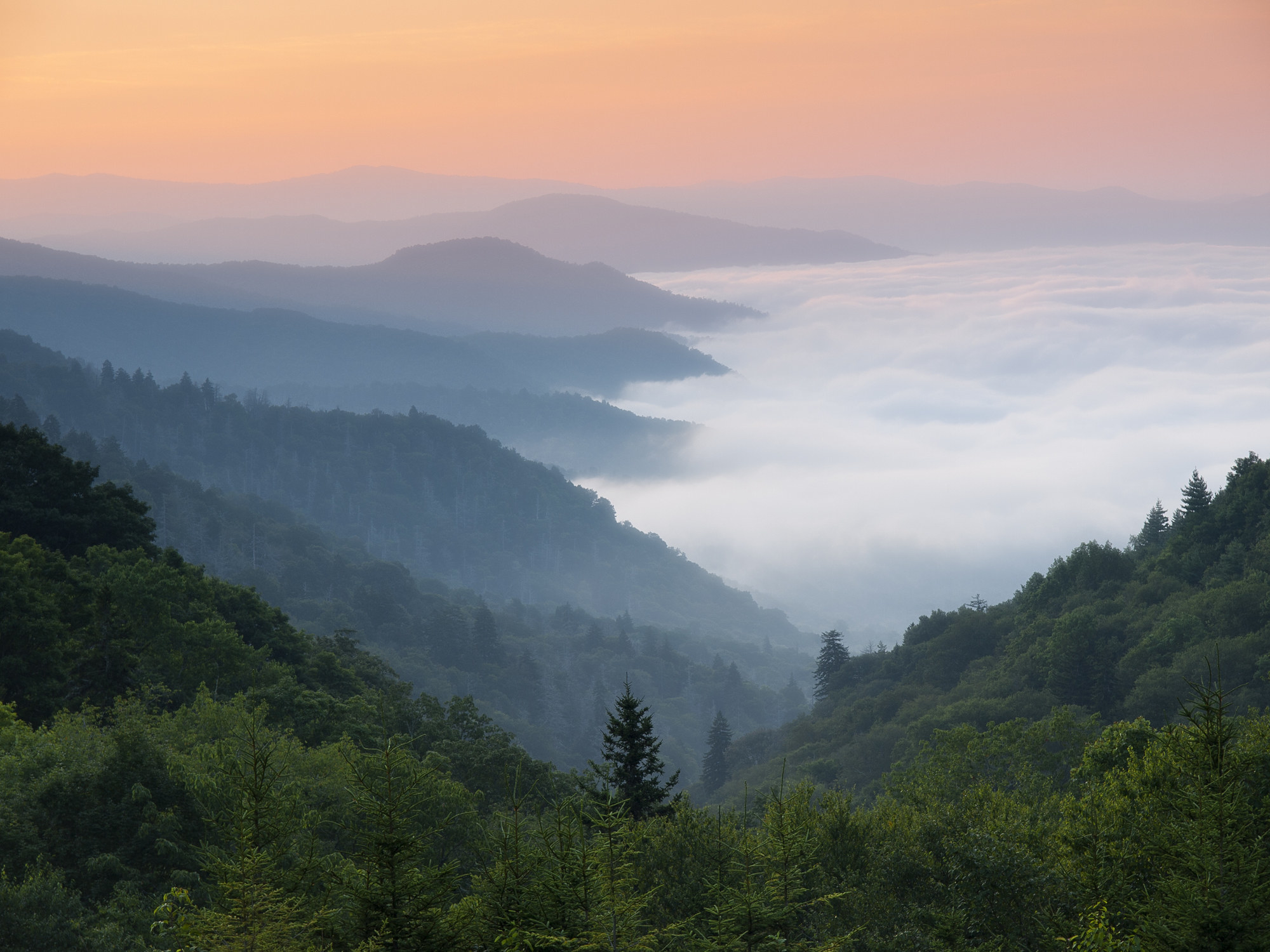 Green trees in the foreground and the sloping hills of Blue Ridge Mountains in the background, all covered by a hazy dawn mist