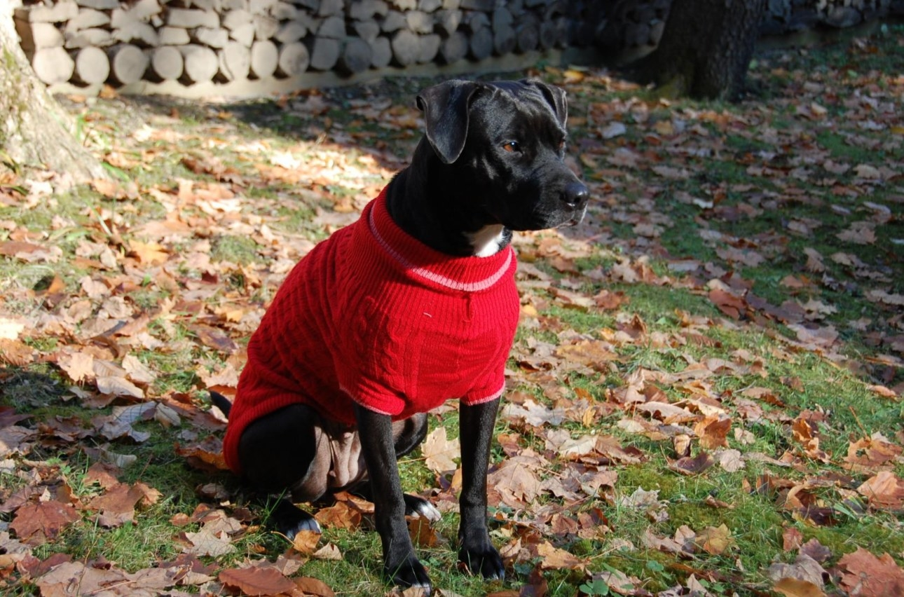 The red sweater