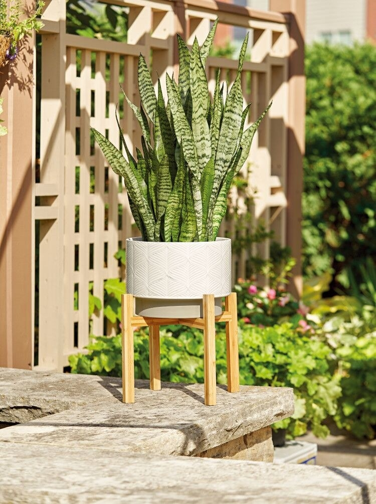 The ceramic planter in white holding a plant outdoors