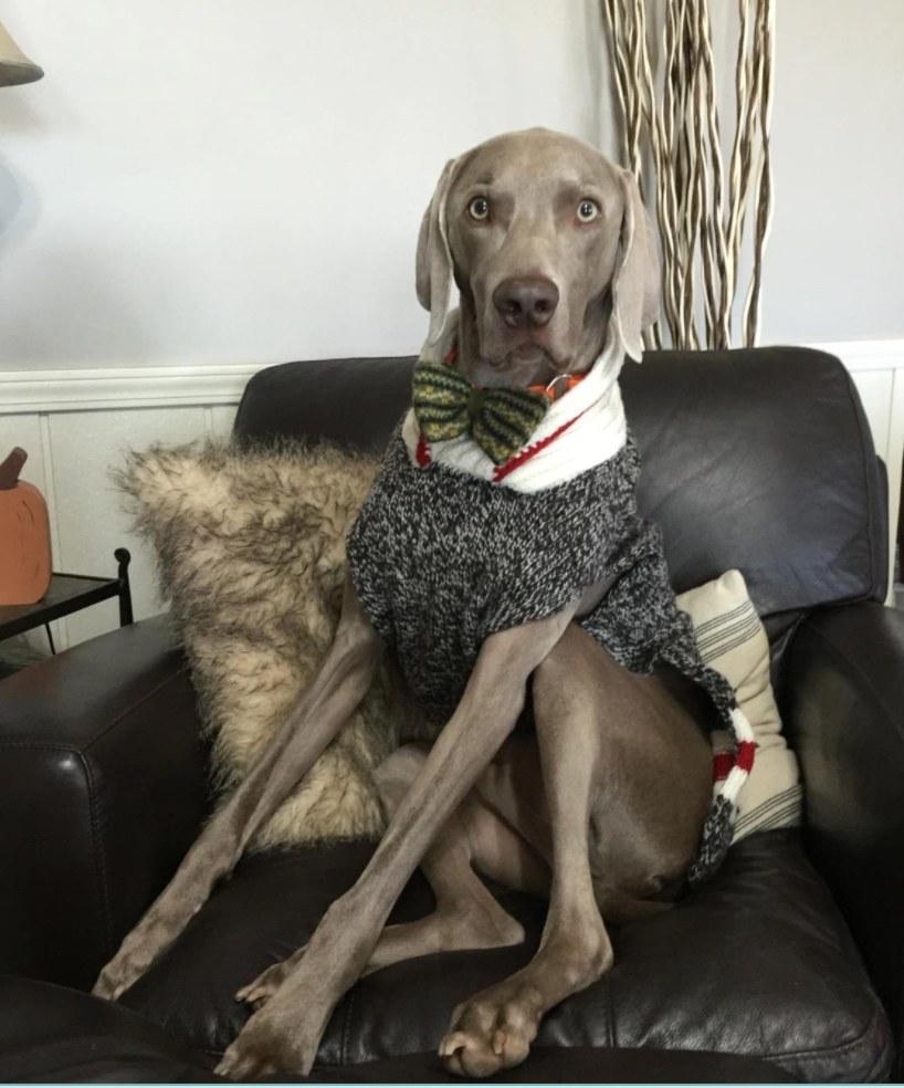 The cozy sweater