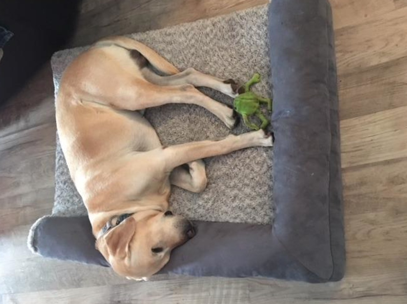 The plush dog bed