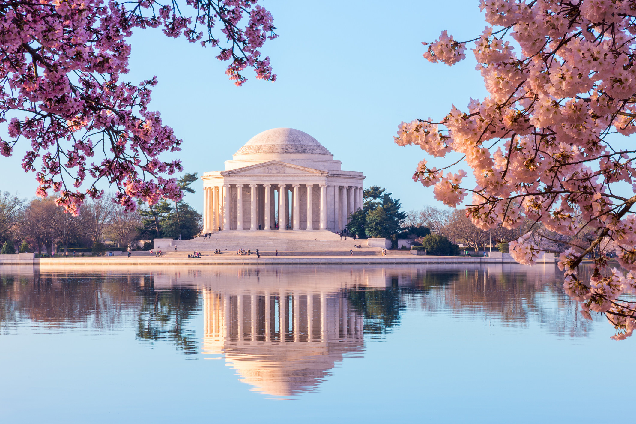 Jefferson Memorial in the background with cherry blossom branches surrounding it close to the camera and the reflection of the building in the water