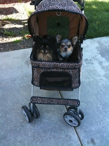 The stroller, which has swivel wheels and a hooded area for pets