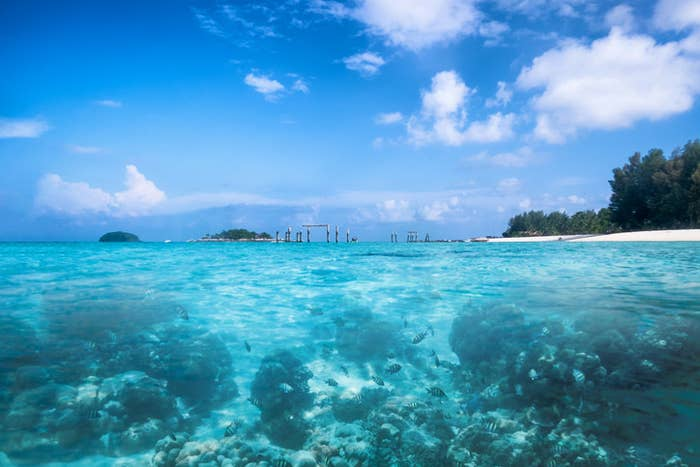 Clear blue water filled with fish, with a white sand island in the background