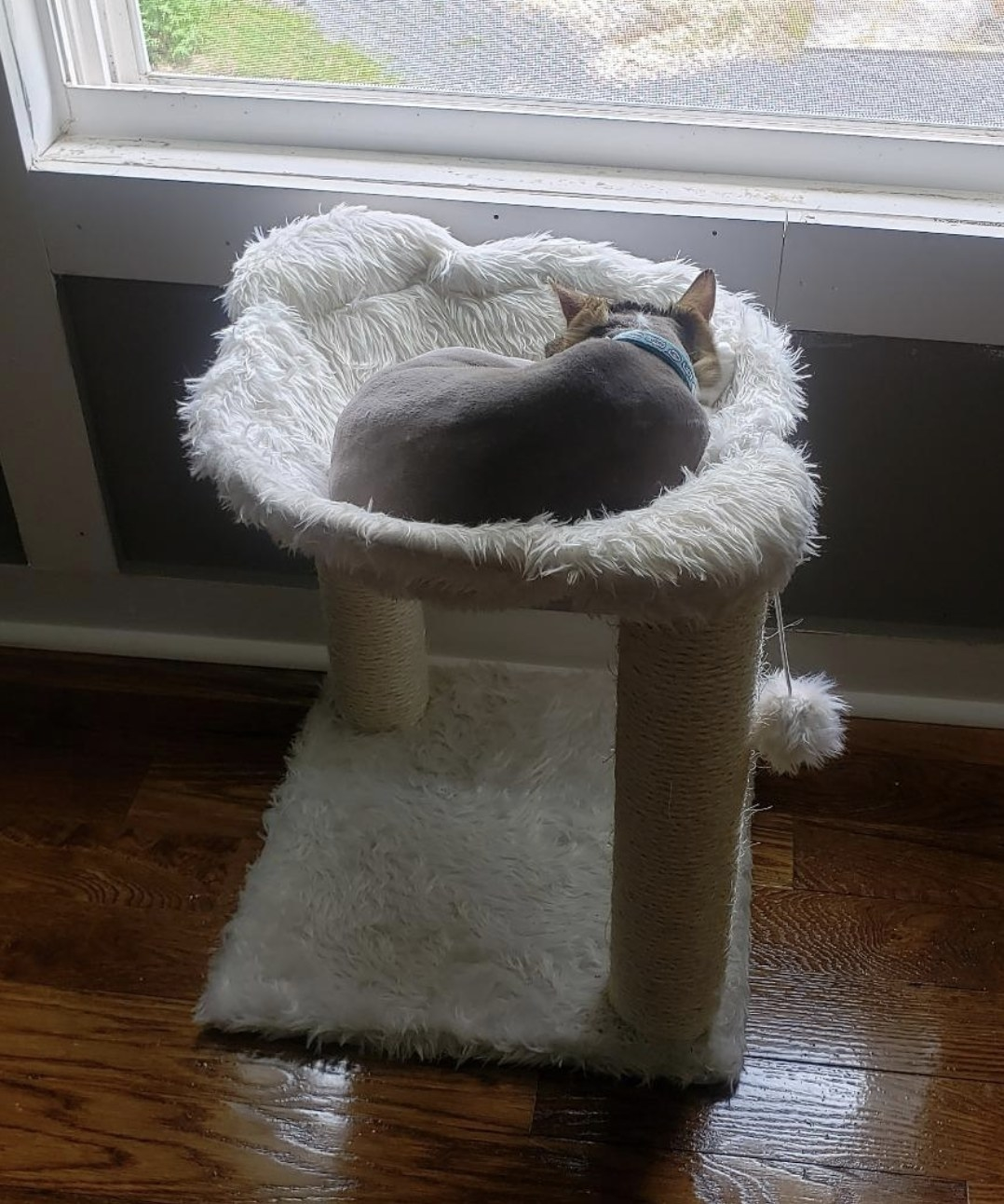 a grey cat sitting in an ivory cat tree with two scratching posts and two furry pom poms