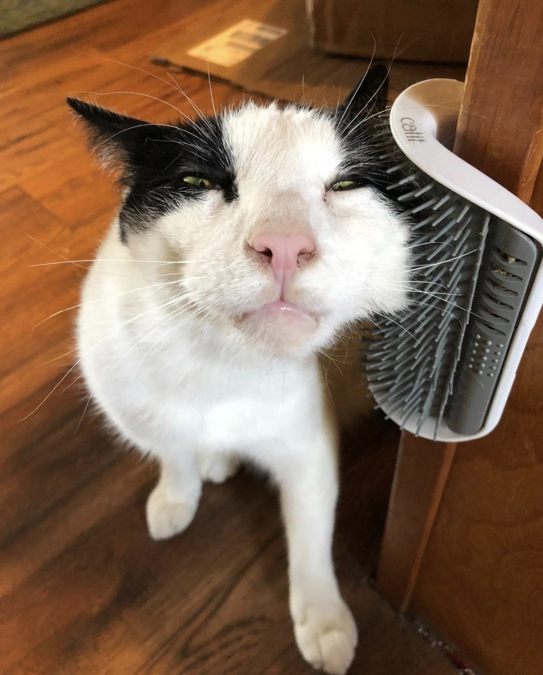 a white and black cat scratching its cheek on a self groomer toy adhered to a corner