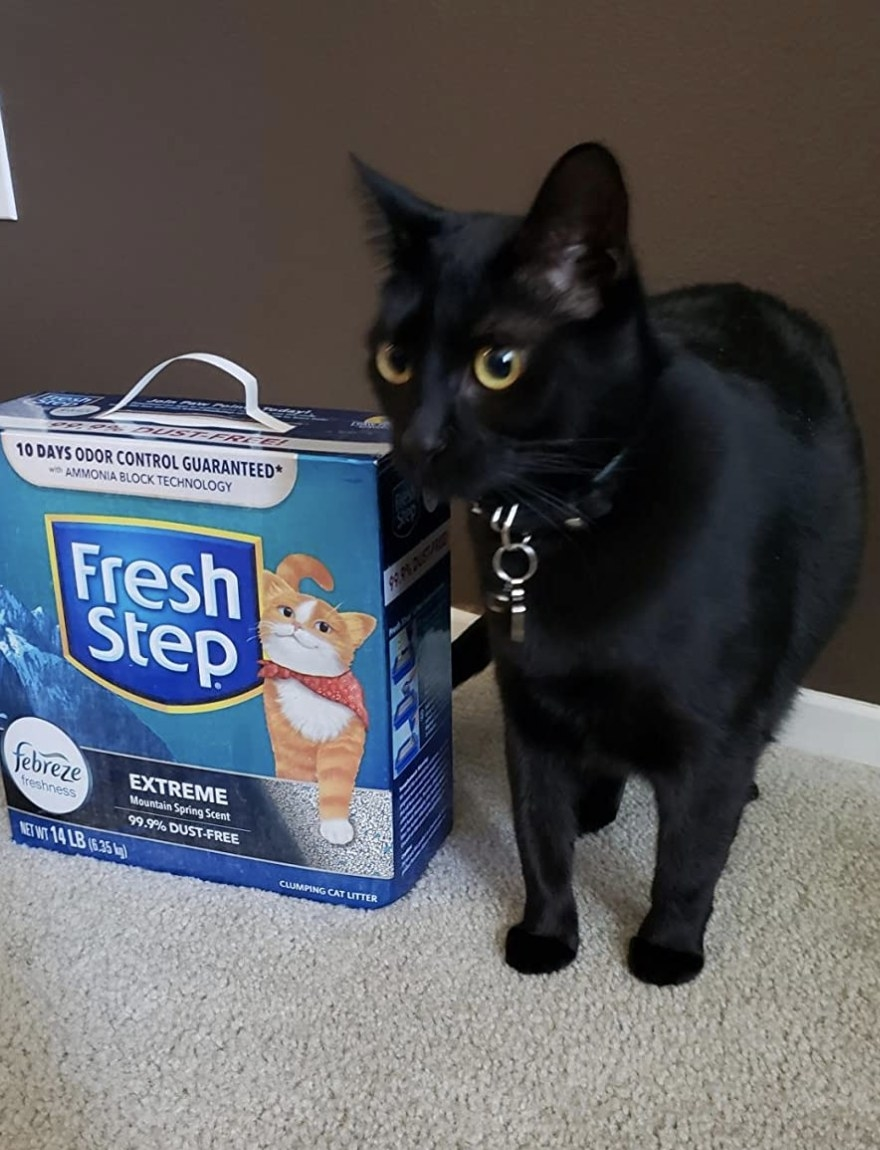 A black cat standing next to a blue box of cat litter