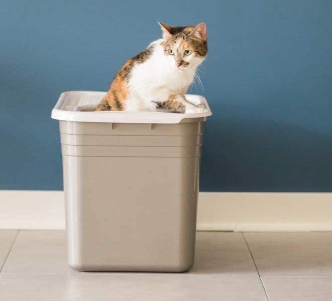 a cat climbing out of a lidded litter box