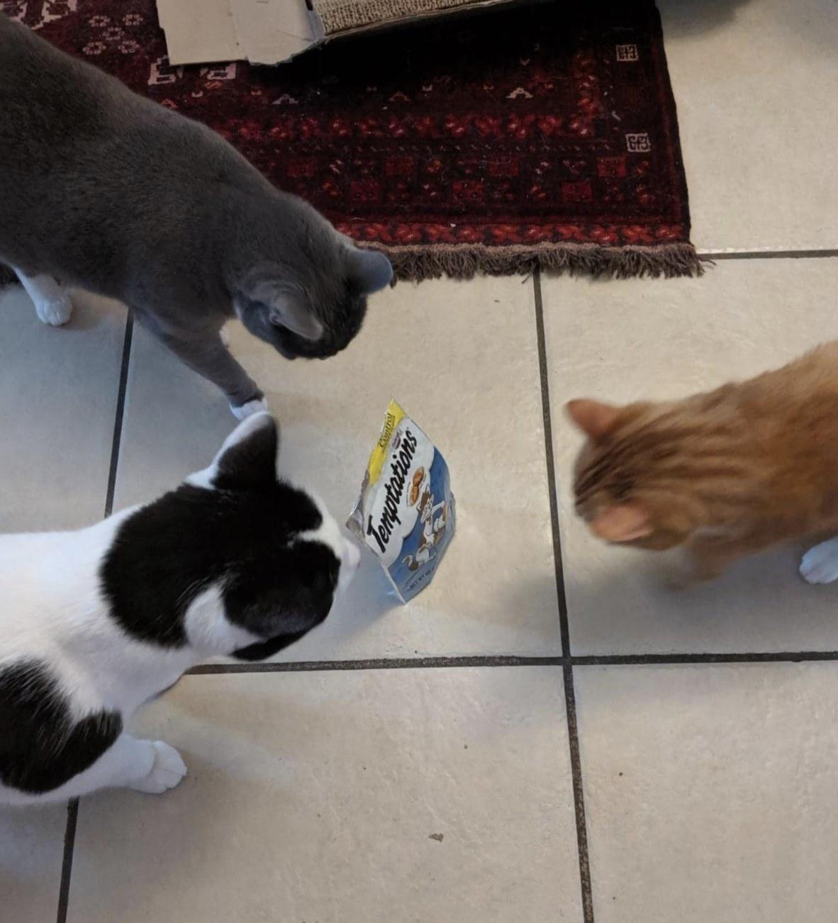 three cats looking at a bag of temptations hairball control treats