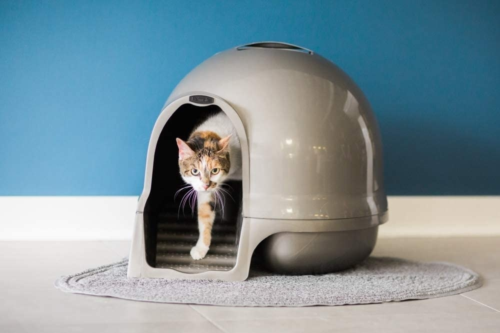 The litter box, which is a dome with a circular entry hole for the cat to enter
