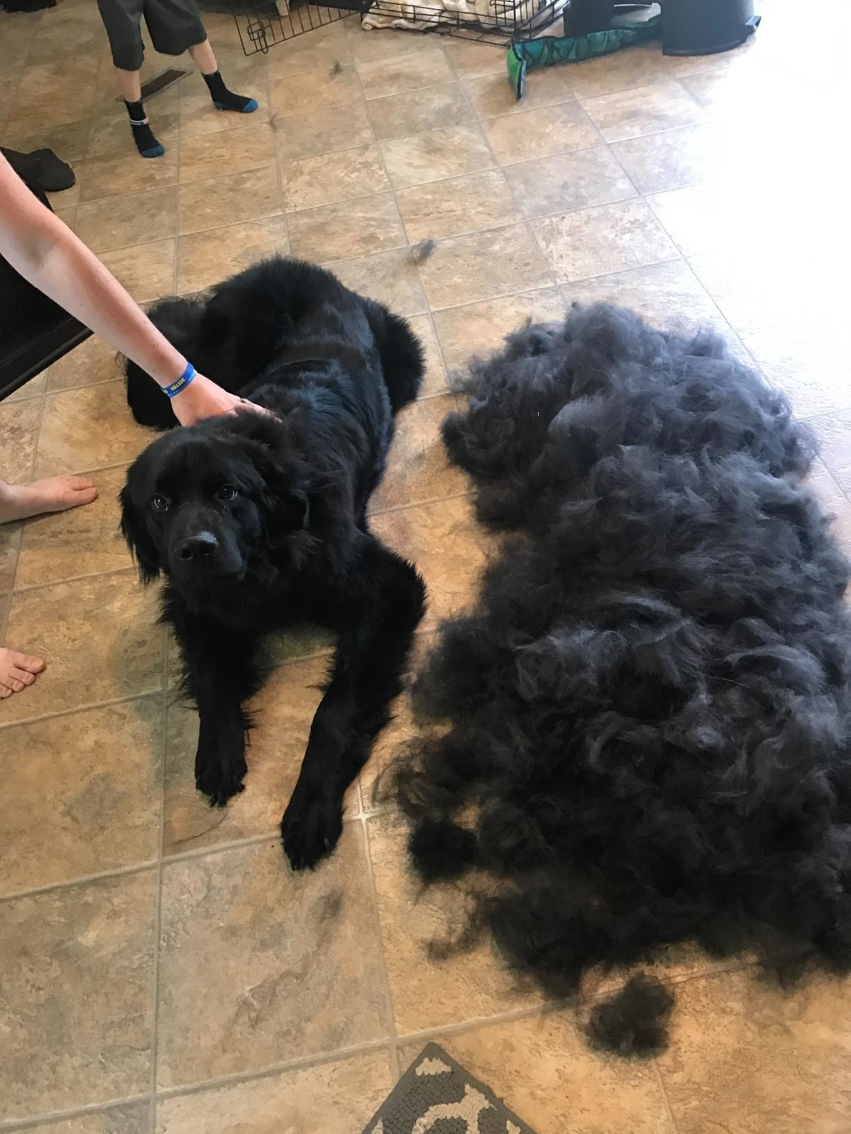 Reviewer's photo of their black dog beside a pile of his fur after using the grooming tool