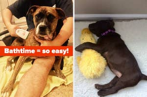 L: User grooming dog with Bissell portable pet cleaner R: Lab puppy napping with a stuffed yellow duck