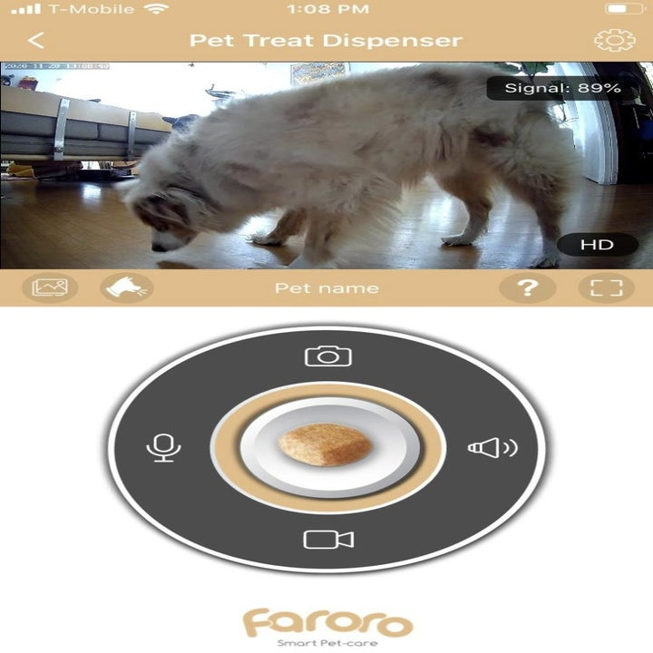 A screenshot of the dog camera showing the dog at home