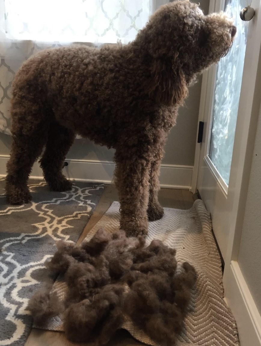 A dog next to a pile of fur