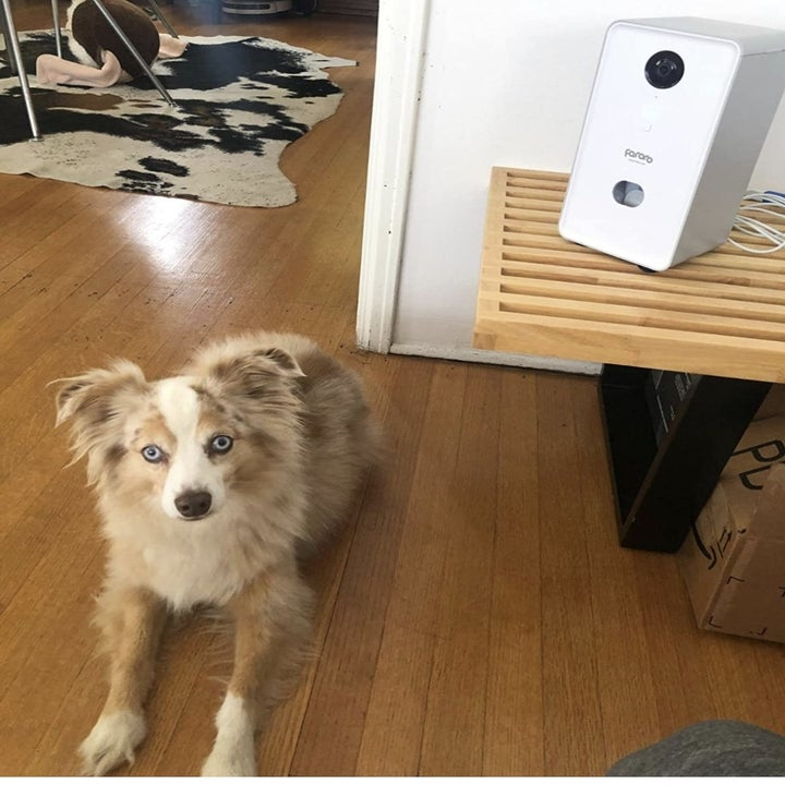 A dog sitting next to a pet camera
