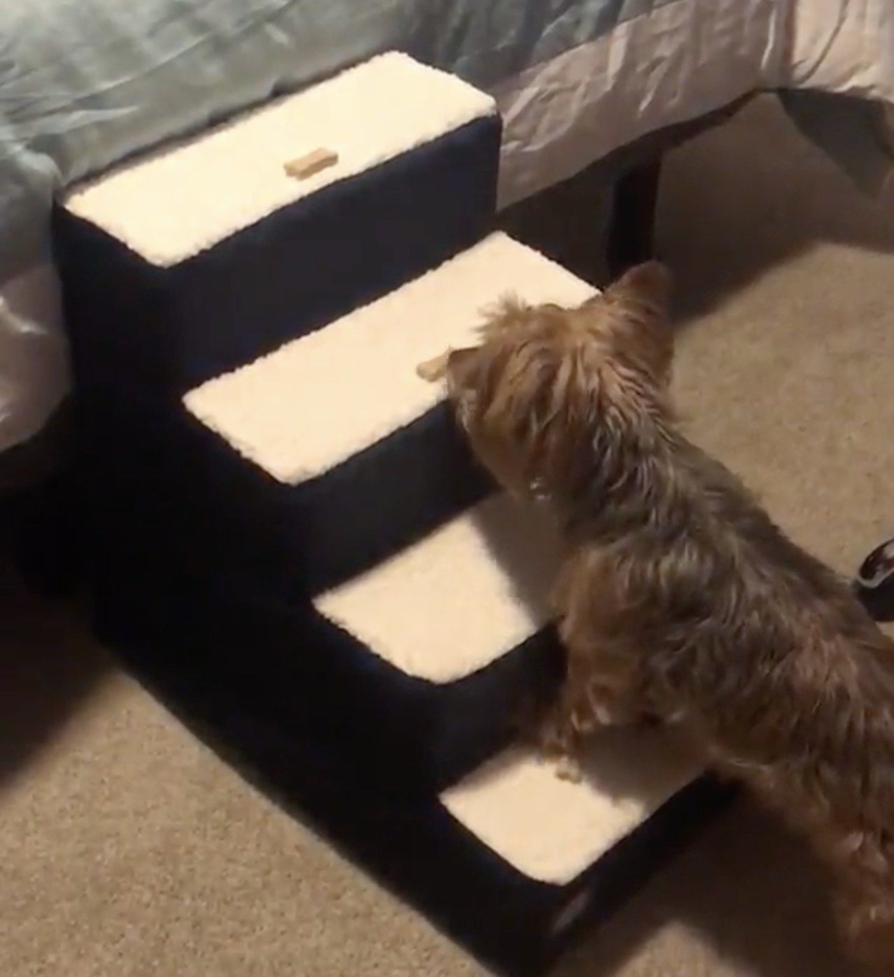A dog walking up pet stairs
