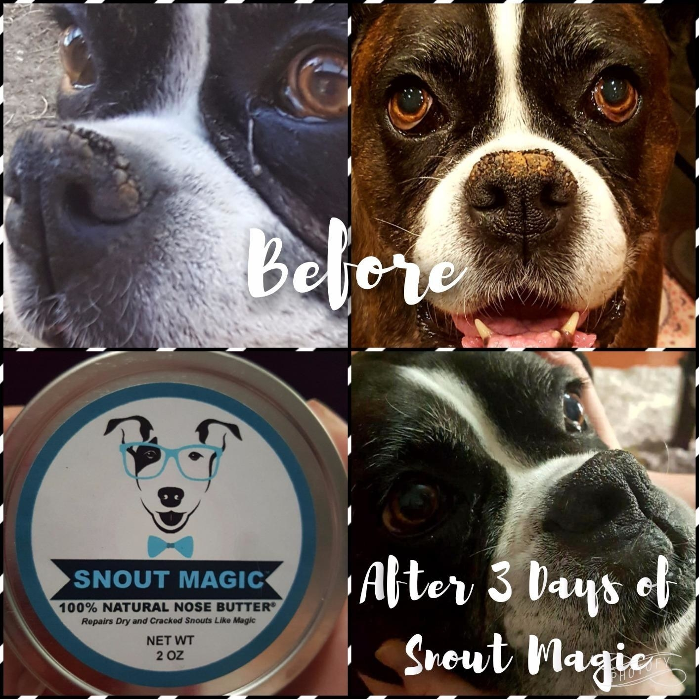 Reviewer's photo showing their black and white dog's nose before and after using snout magic