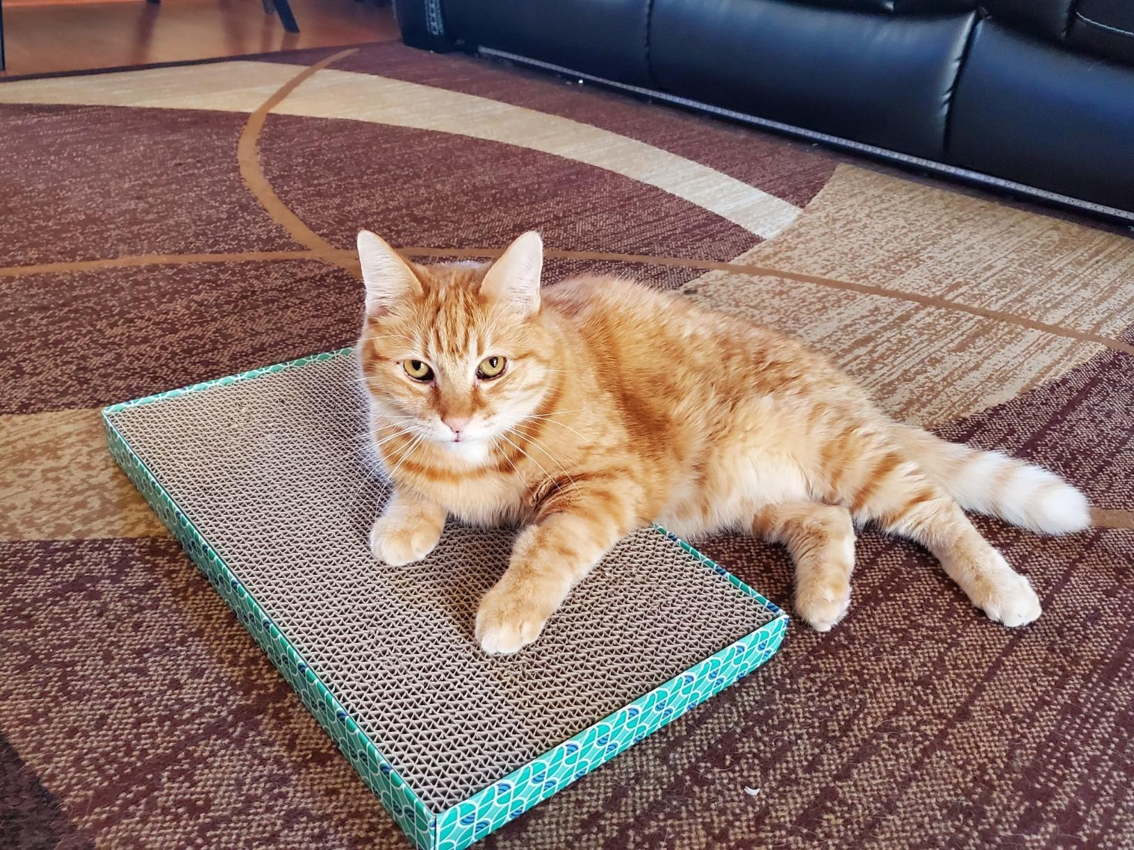 The scratcher with cat lying on top