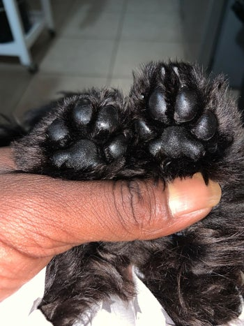 A customer review photo of their dog's paws after using the paw butter
