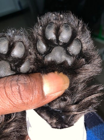 A customer review photo of their dog's paws before using the paw butter