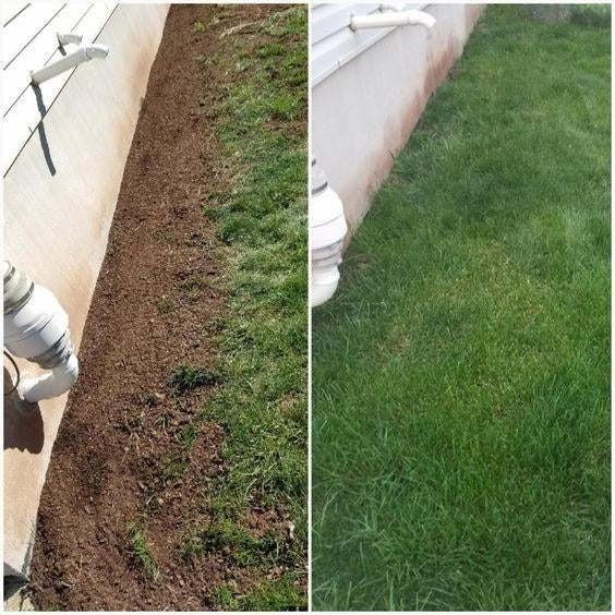Reviewer's before-and-after of dead grass and then healthy lawn