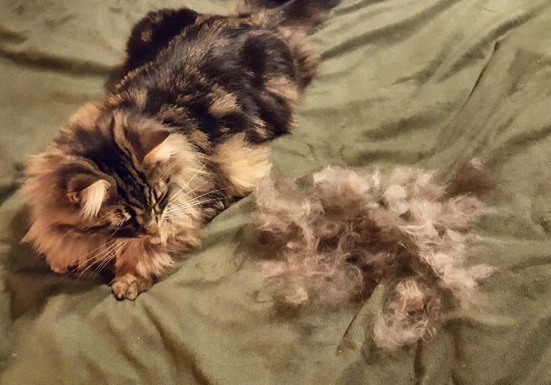 Reviewer's image of their cat next to a pile of mats after using the mat remover