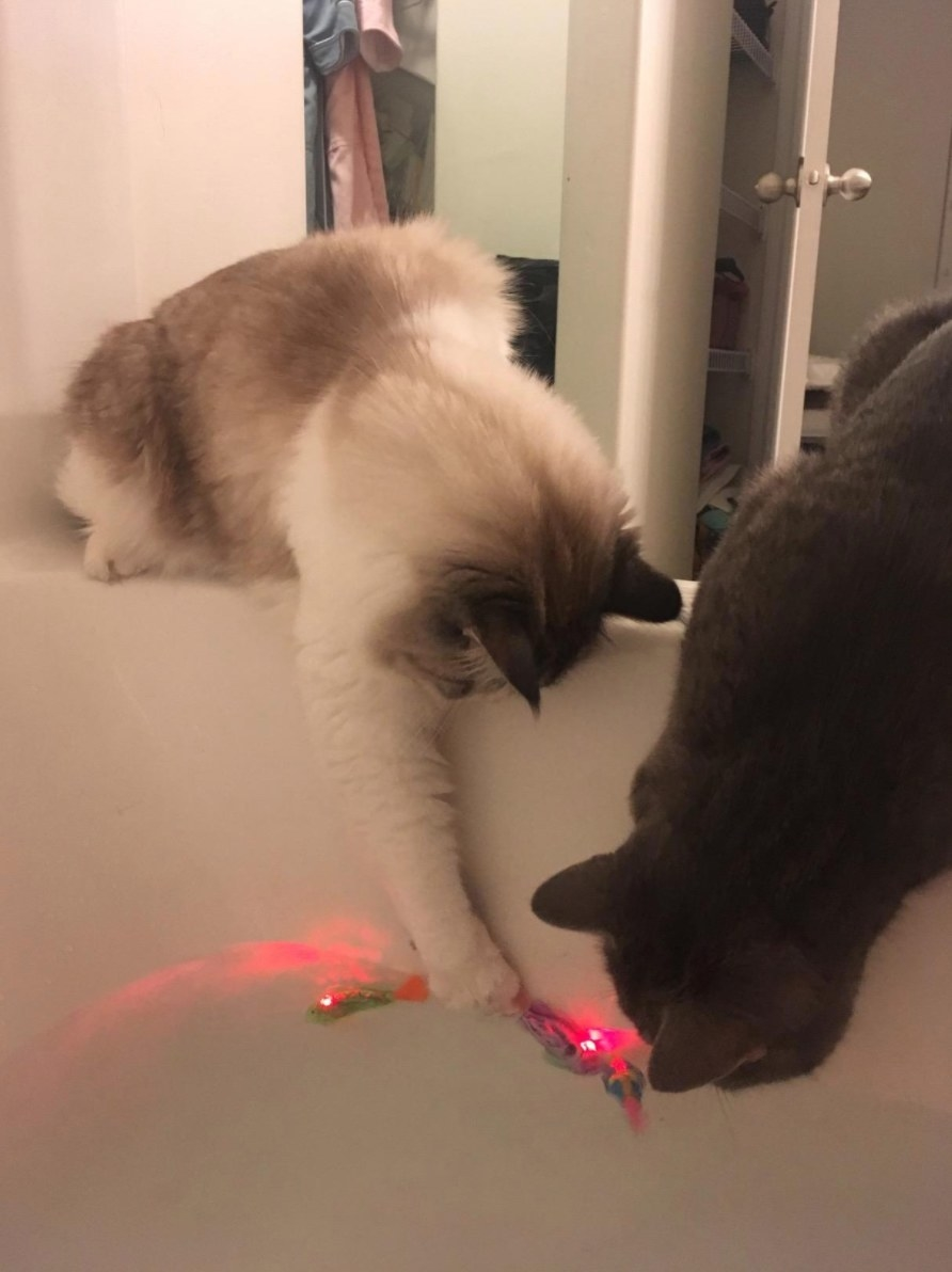 The swimming robot fish toy with the reviewer's cats