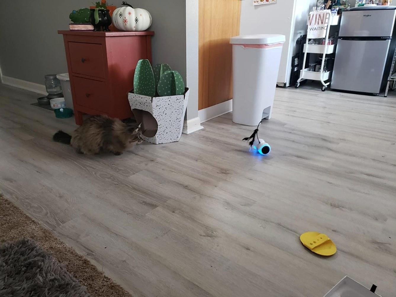The robo interactive cat toy