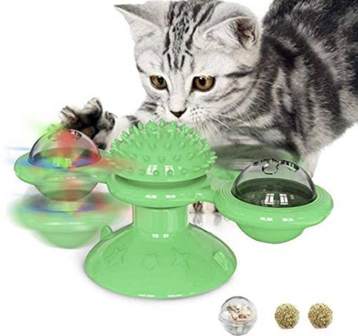 Cat playing with the spinning light-up toy
