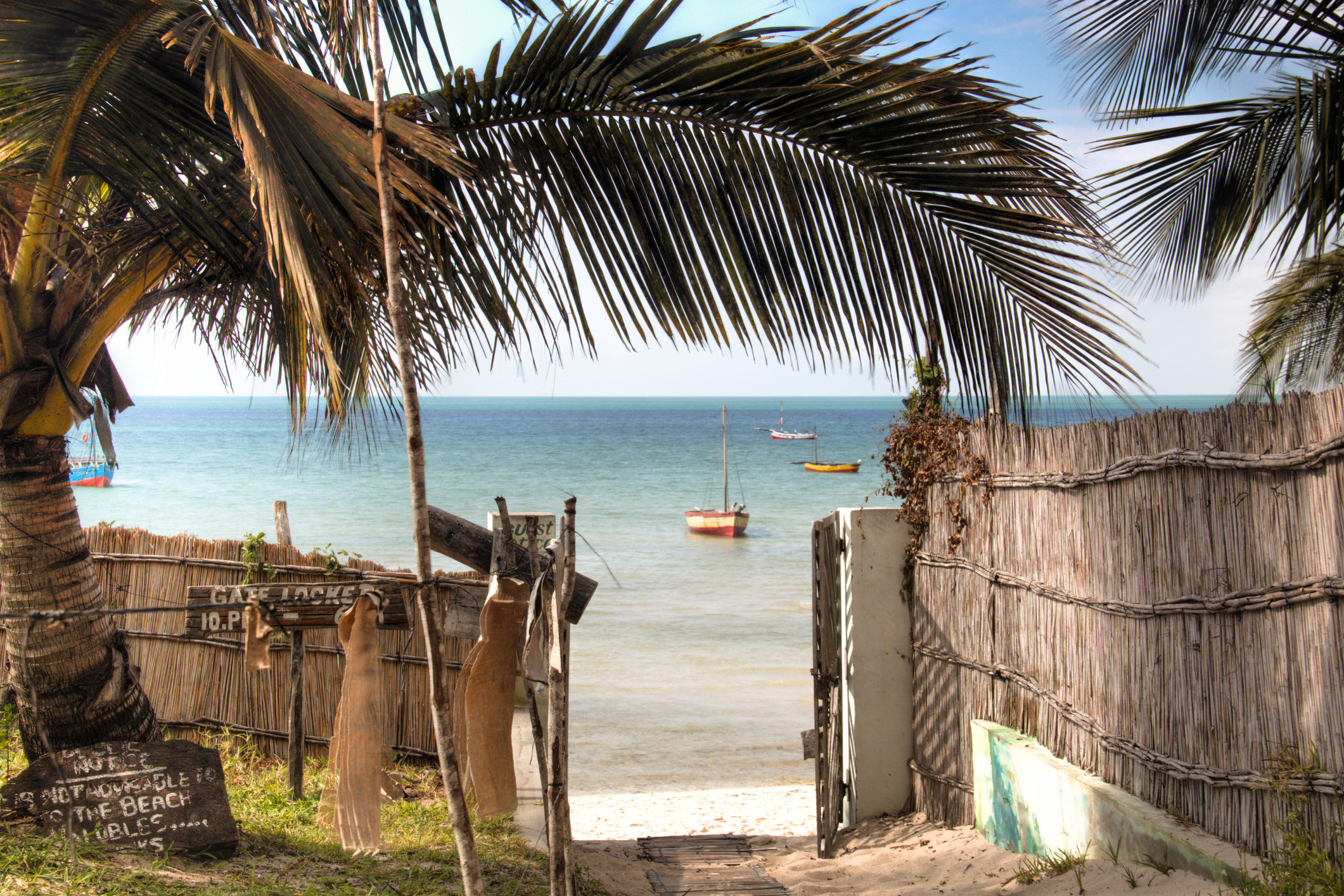 A path leading to the beach, with large palm trees and a fence made from natural materials