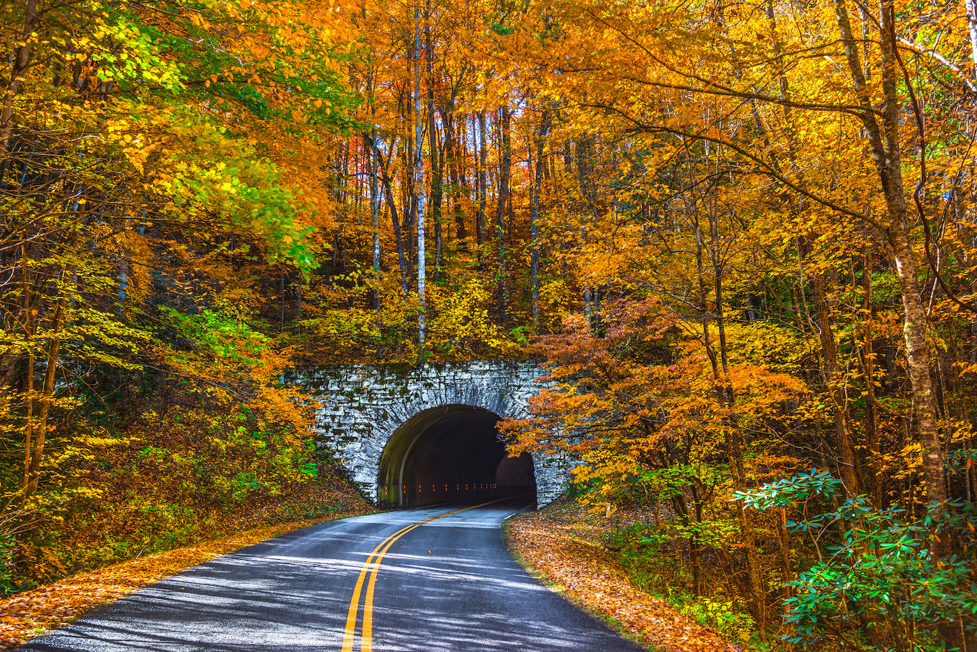 Highway leading to a tunnel in the middle of fall