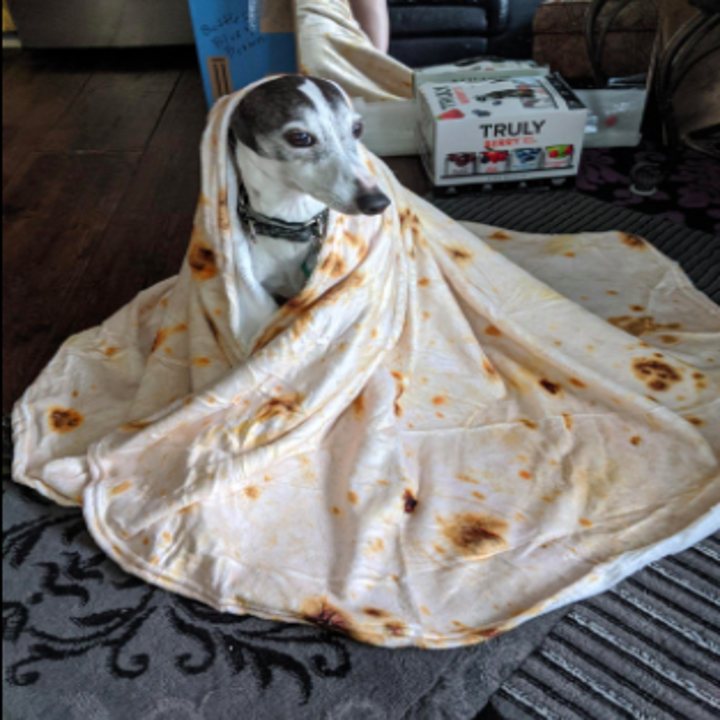 reviewer's dog wrapped in the tortilla-style blanket