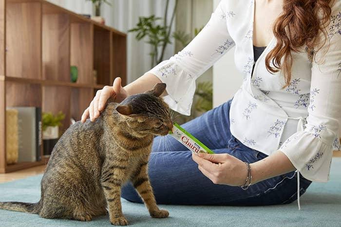 a model feeding a striped cat a green lickable treat