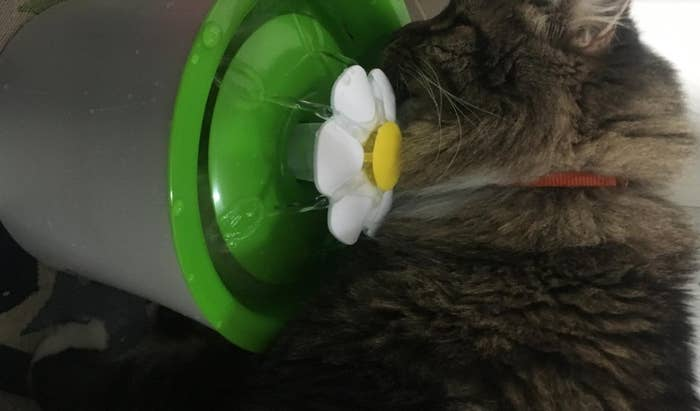a maine coon drinking out of a green water fountain with a white flower spout