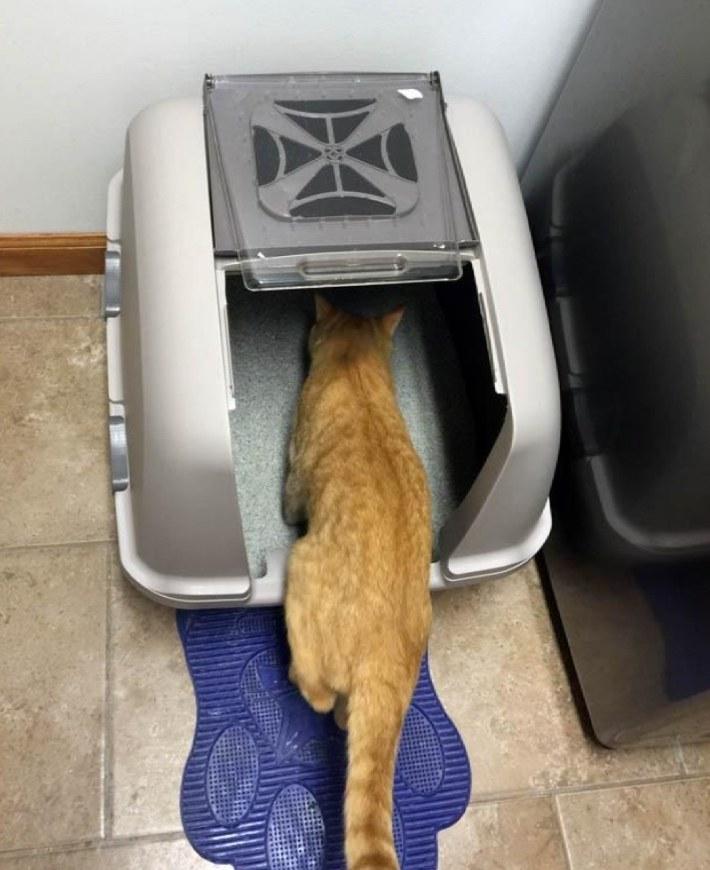 an orange cat entering a hooded litter box