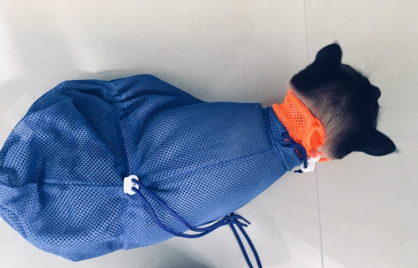a black and brown cat inside of a blue and orange mesh bag for bathing