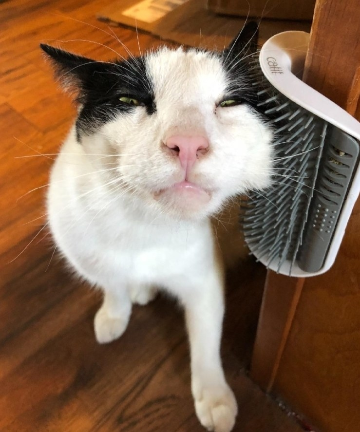 a cat scratching its cheek on a self grooming toy